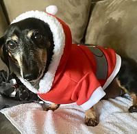 low-rider-santa-dog-jpg