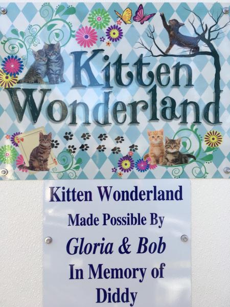 hsspca-kitten-wonderland-entry-sign-2019-jpg