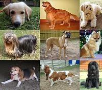 collage_of_nine_dogs-jpg