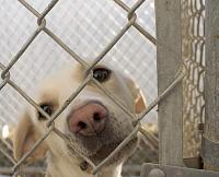 dog_in_animal_shelter_0-jpg