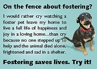 fostering-saves-lives-jpg