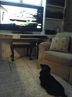 20151222_115052-moses-watching-tv-jpg