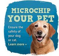 microchip-your-pet-image-jpg