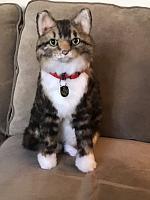 cuddle-clone-cat-jpg