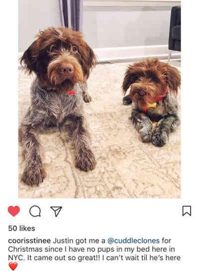 cuddle-clone-big-dog-jpg