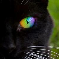 black-cat-portrait-rainbow-eye-jpg