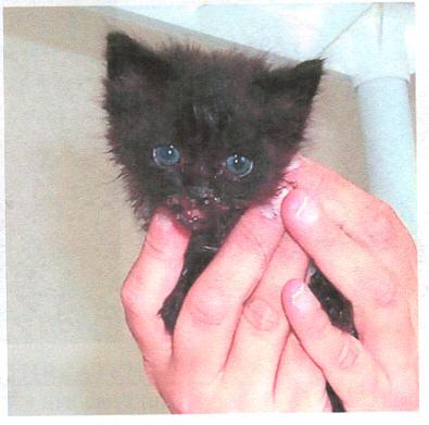 hope-fund-hope-kitten-injured-jpg