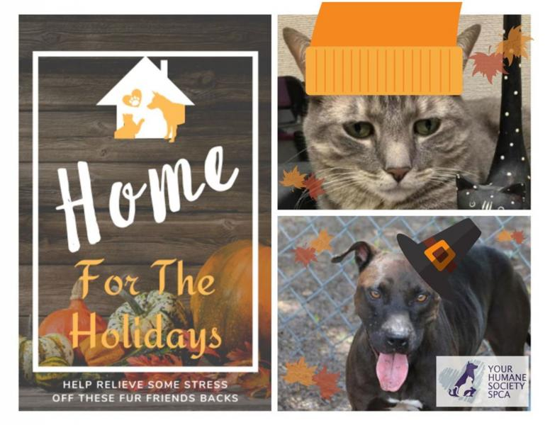 yhsspca-home-holidays-2019-jpg