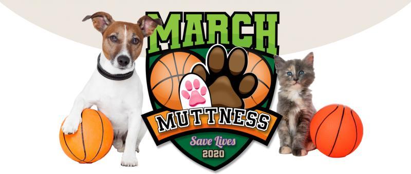 march-muttness-dog-cat-basketball-logo-2020-jpg