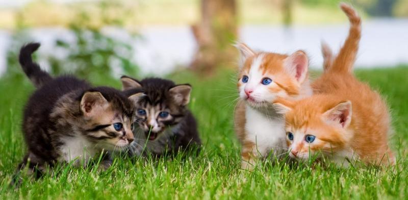 kittens-playing-grass-jpg