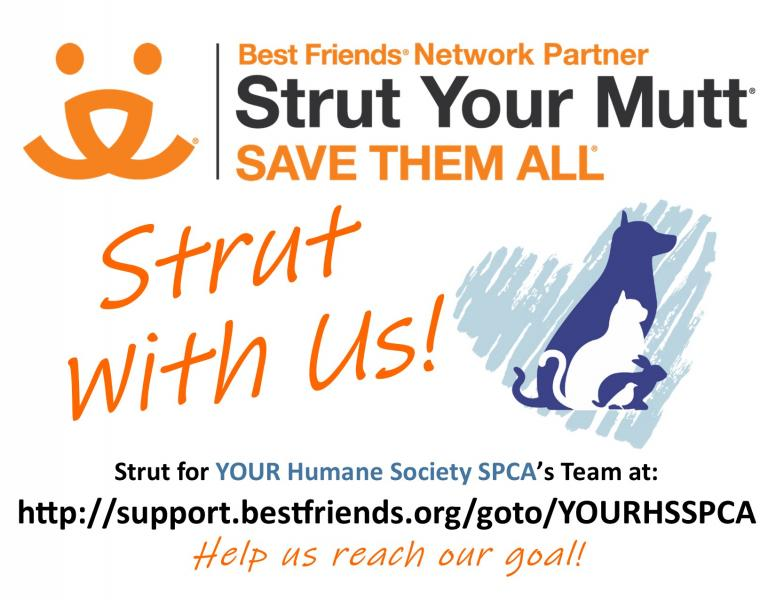 yhsspca-best-friends-virtual-strut-your-mutt-link-promo-2020-jpg