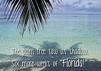 palm-tree-shadow-jpg