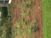 pine-straw-yard-jpg