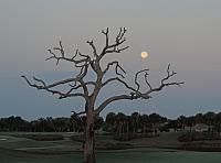 tree-13-jpg