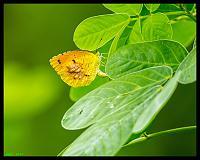 flutterby-jpg