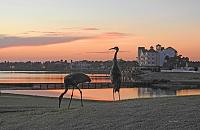 sunrise-sand-hill-cranes-waterfront-1-copy-jpg