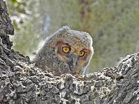1-owlet-signed-jpg