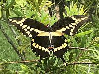 butterfly1-jpg