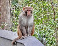 1-monkey-1-signed-jpg