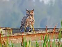 1-owl-signed-jpg