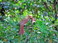 1-cardinal-1-jpg