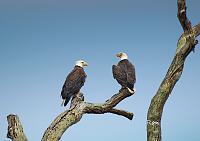eagles-signed-sky-jpg