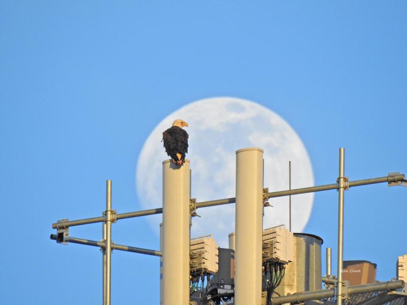 eagle-moon-2-signed-jpg