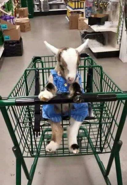 animal-shopping-cart-jpg