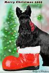 Rhett, Scottish Terrier