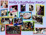 Molly Murphy the Maltese