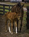 """""""I Love You Mom"""". One of my favorites of a newborn foal and his mother taken at Bridlewood Farms in Ocala."""
